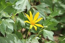Usar Folhas, Talos ou Flores em Chás?